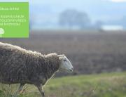 Istarski LAG-ovi_razvoj poljoprivrede